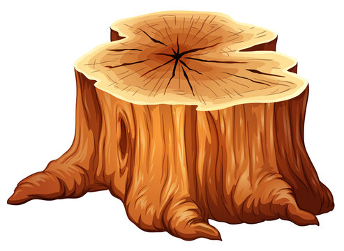 A big tree stump