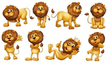 Brave lions