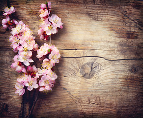 Wall Mural - Spring Blossom over wooden background