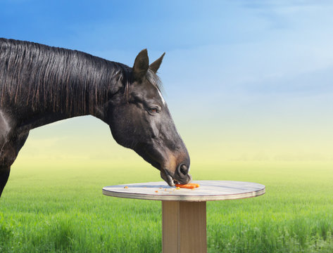 Horse eating carrots on table