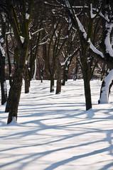 W parku zimą w popołudniowym słońcu