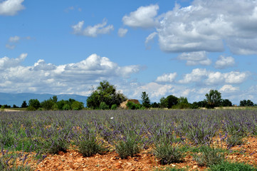 Provence 22