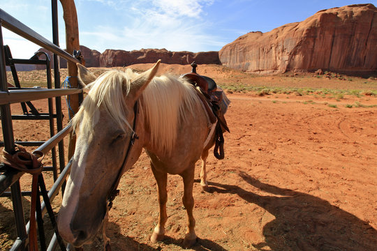 cheval à Monument Valley, Arizona