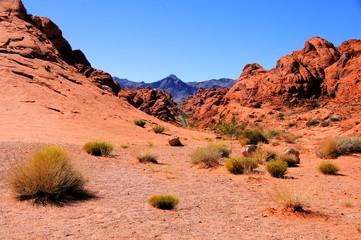 Fototapete - Nevada desert, Valley of Fire State Park, USA