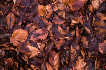Rotten leaves in late autumn as a background
