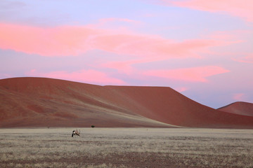Pink sunset clouds over red Namib sand dunes