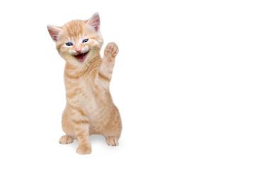 Katze/Kätzchen lachend und winkend