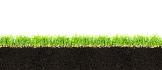 Photo sur Aluminium Herbe Cross-section of soil and grass isolated on white background