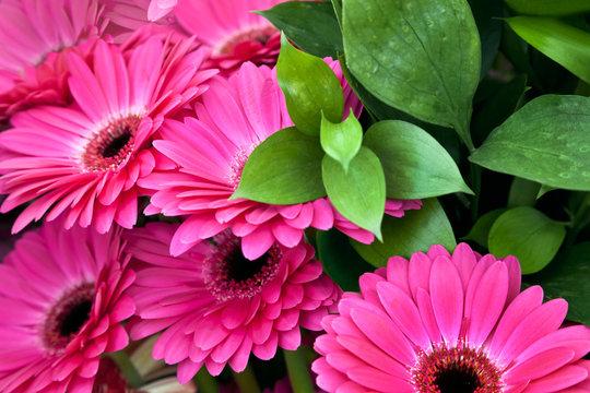 Bouquet of beautiful gerbera.