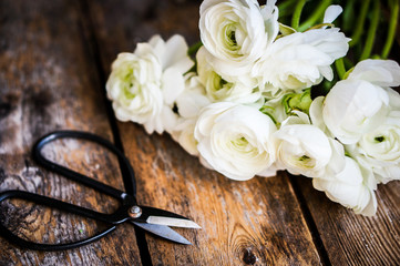 White ranunculus and vintage scissors on rustic wooden backgroun