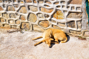 a lonely roadside dog in thailand