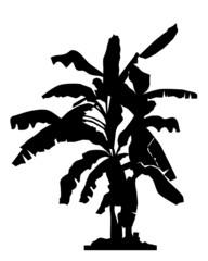 Banana tree silhouette- vector