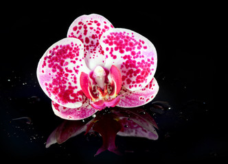 Flower  Orchid in water drops