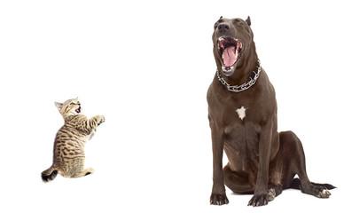 Kitten was scared big dog