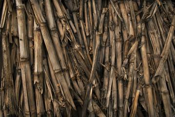 Dried corn stalks background texture