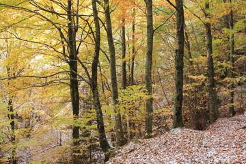 foresta corno delle scale appennino emiliano