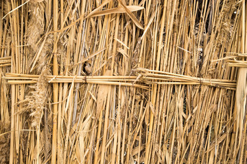 front view of cane dry, as a background