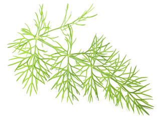 Green dill isolated on a white background.