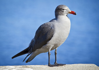 portrait of a seagull in front of the sea