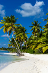 Caribbean beach with a lot of palms - fototapety na wymiar