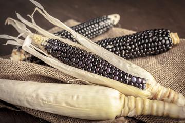 Spoed Foto op Canvas Thee Cob of black-blue corn