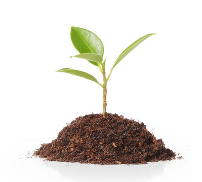 young plant new life