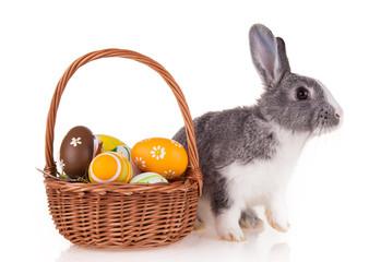 Rabbit with basket on white background