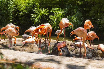 Flock of flamingos in a zoo