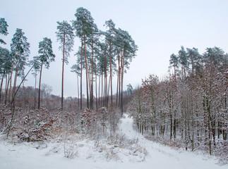 Keuken foto achterwand Bos in mist Winter forest