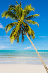 Coconut beach on daylight