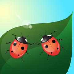 Keuken foto achterwand Lieveheersbeestjes two ladybugs on green leaf in the sun