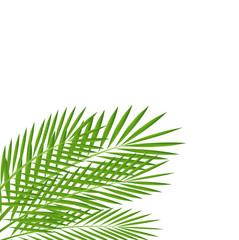 background for a design with green branches