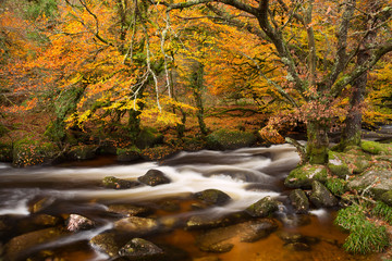 River Dart Dartmoor Devon Uk - fototapety na wymiar