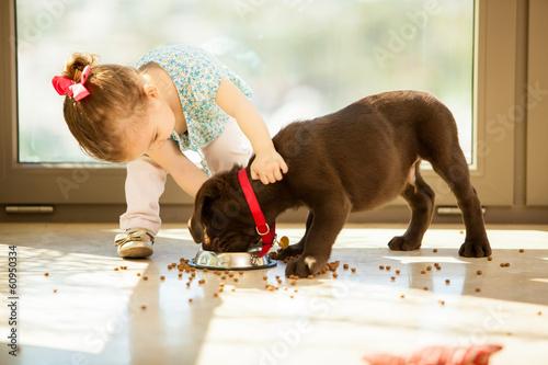 Fototapete Cute little girl feeding her puppy