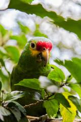 green parrot in natural habitat