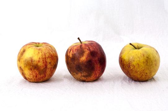 Three not so fresh apples