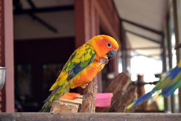colorful parrot..