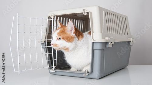 Bringing an outside cat inside