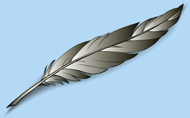 Vector drawing colorful bird feather