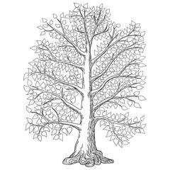 sketch tree calendar. vector