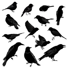 Birds silhouette icon set.