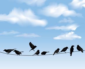 Set of birds on wires over blue sky background.