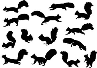 fourteen squirrels isolated on white