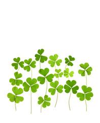 Three leaf clove