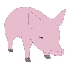 cartoon image of little pig