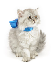 kitten with blue bow