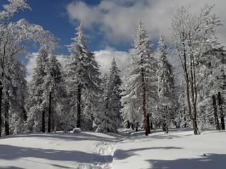 zimowe piękno