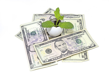 dollars with mint plant