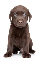 Labrador puppy portrait on white background