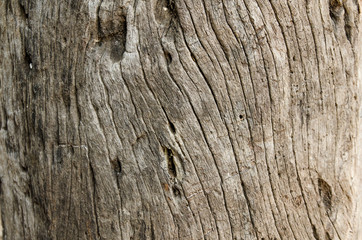Timber stump background